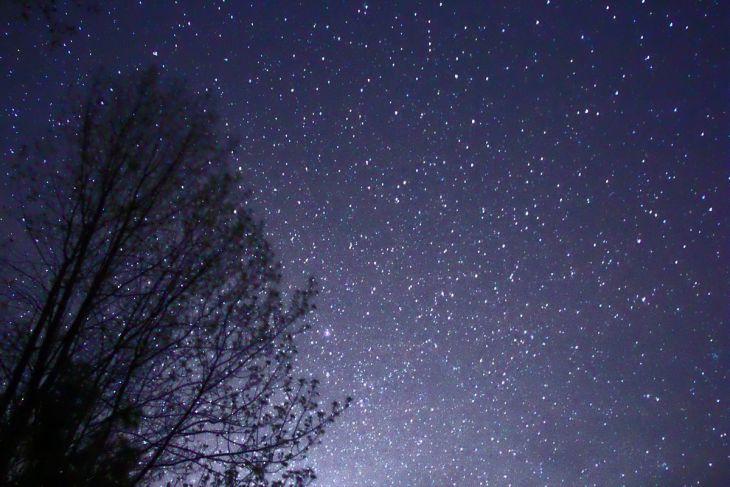 1200px-night_sky_stars_trees_02